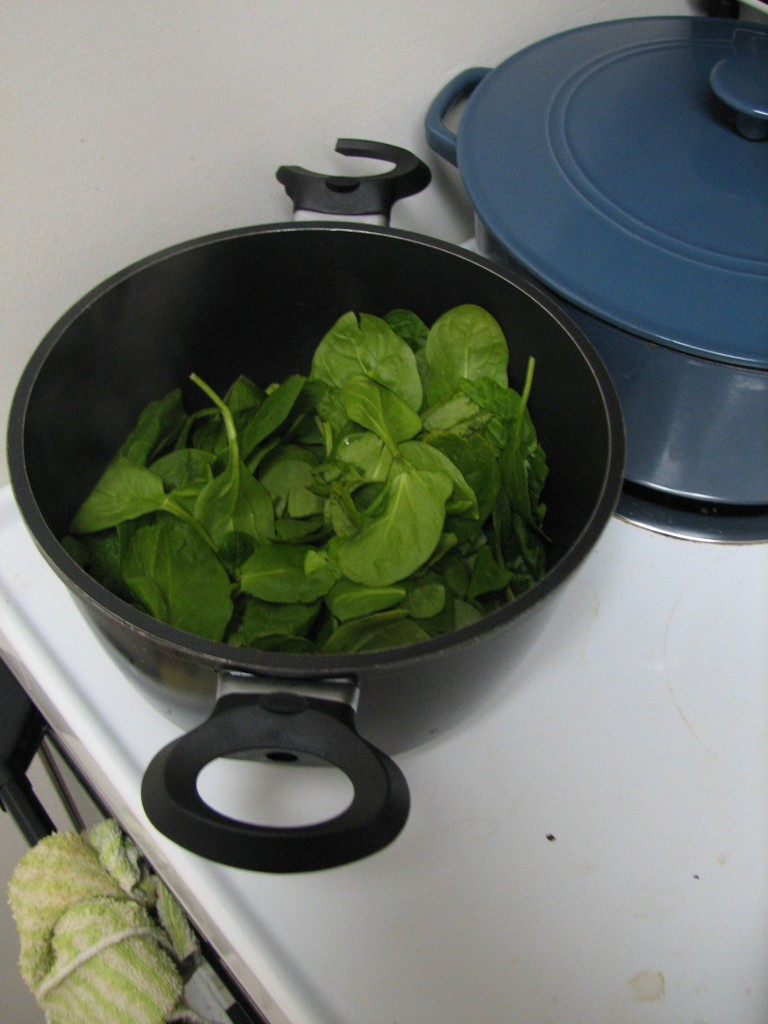 Spinach wilting
